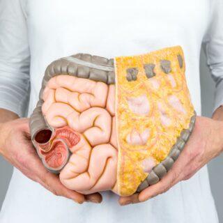 kobieta trzymająca model ludzkich jelit